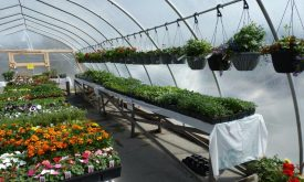 Garden Centre Now Open